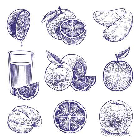 Schizzo arancione. Disegno di arance, agrumi botanici, fiori e foglie incisi. Imballaggio dell'etichetta del succo fresco tropicale. Insieme di doodle di vettore