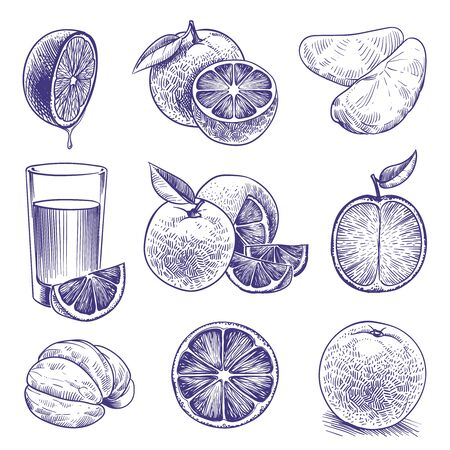 Sketch orange. Drawing engraved oranges, botanical citrus, flower and leaves. Tropical fresh juice label packaging. Vector doodle set