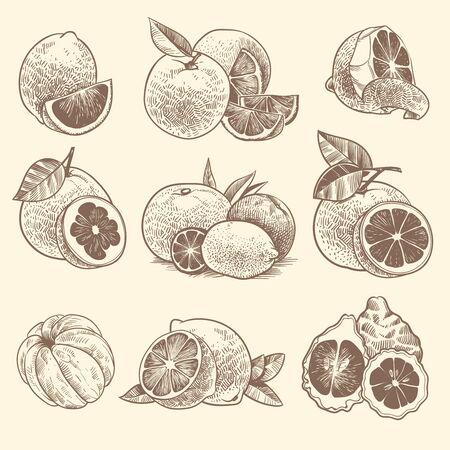 Agrumi di schizzo. Arance, limoni e pompelmi, lime. Agrumi e fiori con foglie. Insieme di vettore di frutta fresca tropicale inciso botanico vintage disegnato a mano Vettoriali