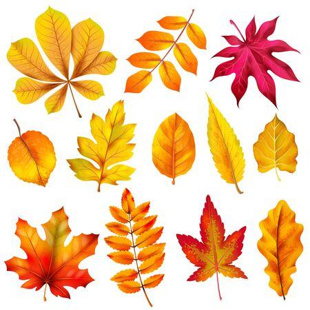 Realistische Herbstblätter. Fallen Sie orange Holzlaub von Kastanie und Ahorn. Eiche und Esche, Linden- und Birkenblatt isolierter Vektor bunter Hintergrundpflanzenbaumsatz