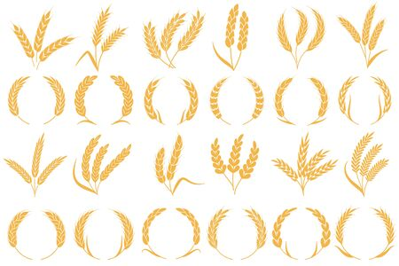Wheat or barley ears. Golden grains harvest, stalk grain wheat, corn oats rye barley organic flour agriculture plant vector bread pattern and frame shape collection Vector Illustration