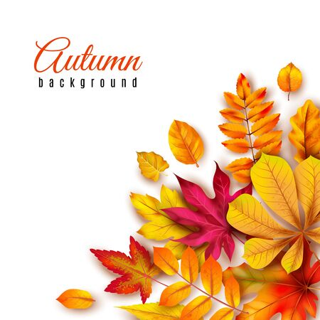 Autumn leaves background. Autumnal border with isolated yellow maple, oak and rowan foliage. Fall theme 3d banner vector seasons abstract paint art template