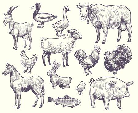Aves y animales de granja dibujados a mano. Cabra, pato y caballo, oveja y vaca, cerdo y gallo, conejo y pavo, pollo y pescado, bocetos aislados de ganso conjunto de vectores