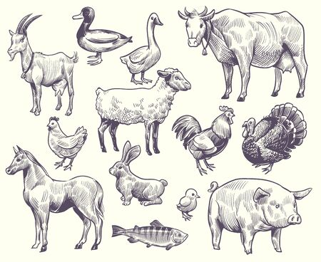 Hand drawn farm animals and birds. Goat, duck and horse, sheep and cow, pig and rooster, rabbit and turkey, chicken and fish, goose isolated sketches vector set