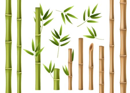 Realistic bamboo. Green and brown bamboo stems with leaves, asian forest 3d vector isolated china and japan decoration abstract chinese elements Фото со стока - 133739308