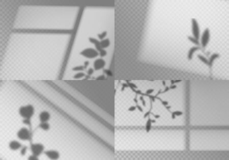 Overlay window shadows. Realistic leaves and window frames monochrome natural lighting transparent soft light natural effects vector wall indoor abstract plant set