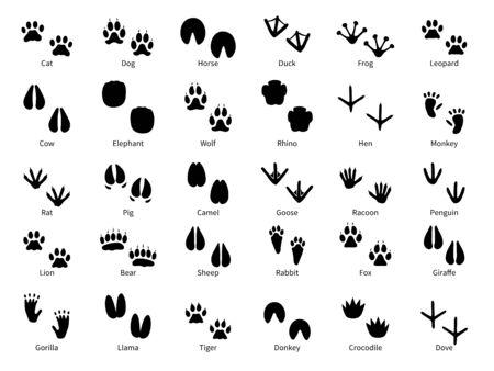 Impronte di animali. Pista a piedi zampa di animali con nome, tracce di animali domestici, sentiero di uccelli e animali selvatici, impronte di piedi vettoriali isolate silhouette safari della fauna selvatica
