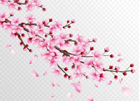 Realistic sakura. Beautiful sakura branches with pink flowers and falling petals, romantic floral japanese cherry oriental bloom decoration vector illustration Illusztráció