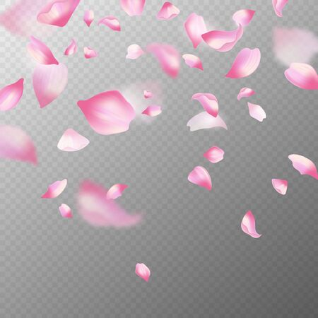 Pink sakura petals. Realistic pink falling cherry petals, spring blossom tree. Romantic floral decoration japanese elements vector blossoming flower abstract background