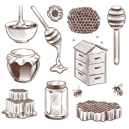 Sketch honey. Engraved natural organic sweet food honey, pollen and beeswax, hive bee. Beekeeping etching beehive vintage hand drawn vector set