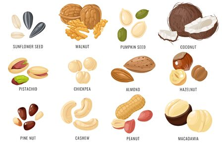 Nuts and seeds. Cashew and hazelnut, almond and coconut, walnut and peanut, pistachio. Chickpea, macadamia and sunflower, pumpkin seed vector snacking set
