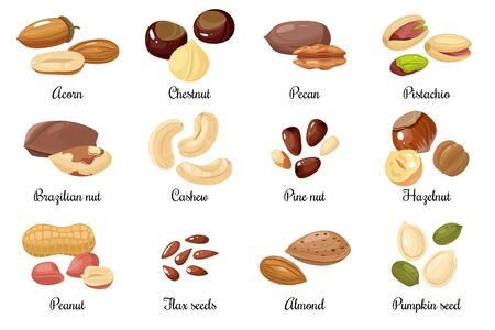 Nuts and seeds. Almond and pistachio, acorn and peanut, chestnut, and pecan. Cashew and hazelnut, pumpkin and flax seeds cartoon vector snack food set Ilustrace