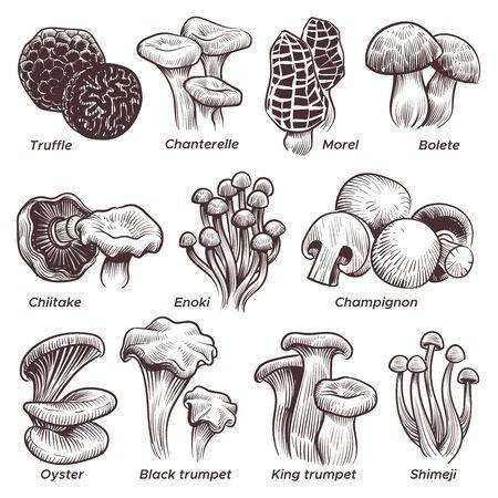 Sketch mushrooms. Hand drawn various mushroom. Morel, truffle and champignon, chanterelle and oyster, black and king trumpet vintage isolated vector set Vektorgrafik