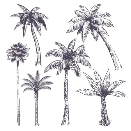 Sketch palm tree. Hand drawn tropical coconut palm trees, africans plants. Hawaii summer vacation engraving drawing vector isolated jungle set Vektorové ilustrace