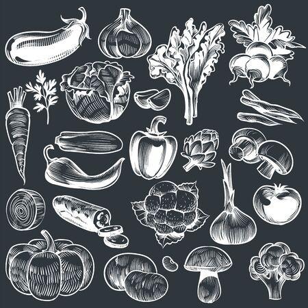 Chalk drawing of vegetables. Various vintage hand drawn vegetable, organic carrots broccoli eggplant, cabbage and mushroom, farming food. Sketch vector set on blackboard Illustration