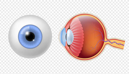Realistic human eyeball. Eye retina structure, round iris and pupil texture, anatomy colorful object close up front, and side view eyeballs vector isolated set Vektorgrafik
