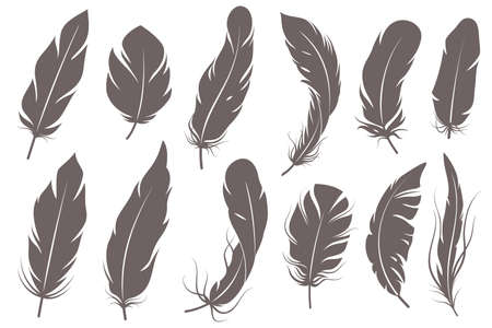 Feather silhouettes. Different feathering birds, graphic simple shapes pen decorative elements, gray elegant vintage sketch plume wings isolated set