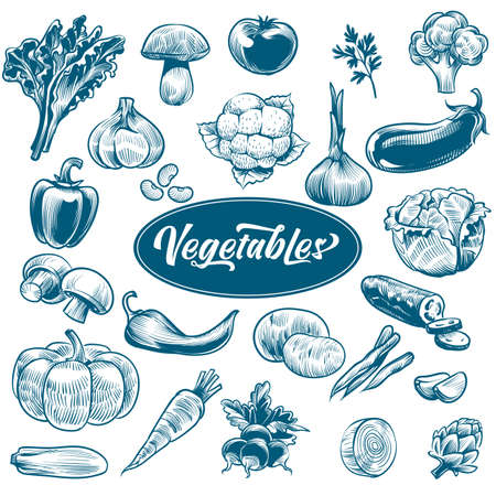 Chalk drawing of vegetables. Various vintage hand drawn vegetable with text, organic carrots broccoli eggplant, cabbage and mushroom, farming food. Sketch style vector isolated set