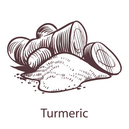 Turmeric root icon. Botanical hand drawn sketch for labels and packages in engraving style. Aromatherapy antioxidant ginger. Cooking symbol for restaurant or cafe menu. Vector single isolated element