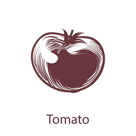 Tomato object. Botanical hand drawn eco vegetable sketch for labels and packages in engraving style. Cooking symbol for restaurant or cafe menu. Vector single isolated whole element