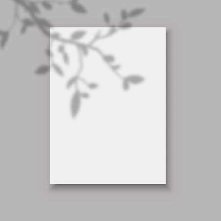 Overlay leaves shadow. Realistic poster on wall front view mockup with white paper pages and plant branch shadows. 向量圖像