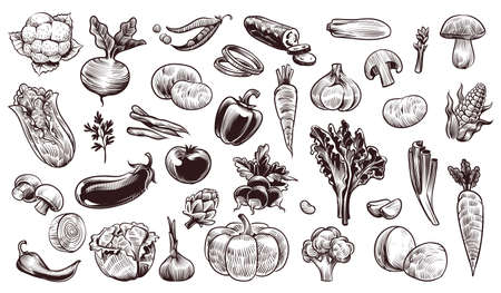 Vegetables sketch. Hand drawn various farming harvest food vintage collection, organic carrots broccoli eggplant, cabbage and mushroom, pumpkin garlic and greens fresh eco products vector isolated set