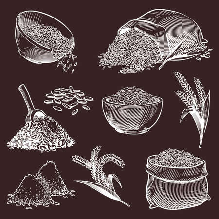 Hand drawn sketch rice. Vintage asian grains and ear, bowl with jasmine or basmati, pile of paddy, spoon and bag with white seeds set in engraved style, cooking ingredient vector isolated illustration