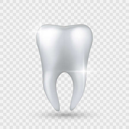 Shiny tooth. Realistic healthy clear white tooth isolated on transparent background, enamel whitening in dental clinic.