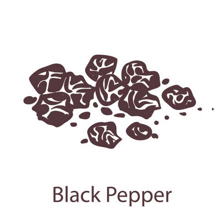 Black pepper. Hand drawn fragrant bitter hot seeds, sketch for labels and packages in engraving style.