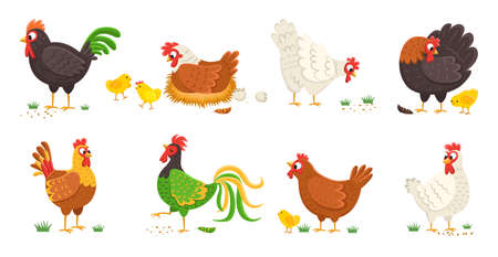 Cartoon domestic chicken. Funny different roosters and mother hens various breed with small chicks, colorful easter color birds collection, egg shell and nest. Cute farm animals vector isolated set Illustration