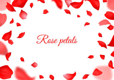 Falling red rose petals. Realistic flying petal, romantic botanical frame for valentines day and wedding decor, blurred floral decorative element style smooth vector border horizontal poster or flyer