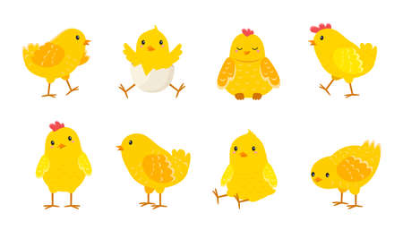 Cartoon Easter chicks. Cute baby farm birds with yellow feathers. Cheerful little chickens and roosters activities. Funny domestic animals hatched from eggs. Isolated newborn poultry, vector set Illustration