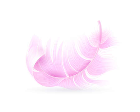 Pink feather. Exotic bird, flamingo or parrot realistic flying fluff, bird soft bright falling twirled plumage, decor element for design vector single closeup object isolated on white background
