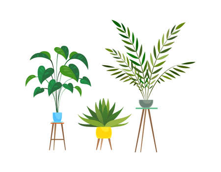 Indoor plants. Tropical ficus or palm in pot on wooden stands, houseplant decorative collection, colorful flowerpot and green leaves, home trees set, Cartoon flat isolated illustration Illustration