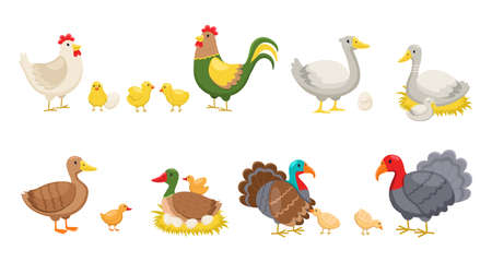 Farm birds. Rural poultry yard inhabitants, funny chicks and hen and rooster, breed ducks, geese and turkeys, nests and eggs. Vector cartoon cute colourful domestic animals isolated set