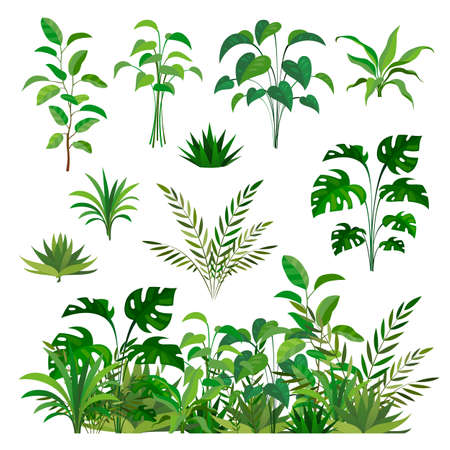 Herbal green elements. Tropical jungle leaves and brunches collection, paradise summer flora, rainforest isolated decor elements and clip art, exotic plants decorative border vector set Illusztráció