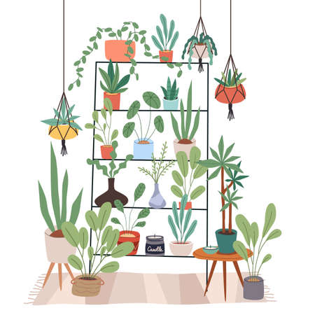 Indoor plants stand. Rack for houseplants. Home garden. Flowers on shelves and hanging pots. Room interior. Minimalist furniture with ficuses and candles. Vector succulents in apartment 일러스트