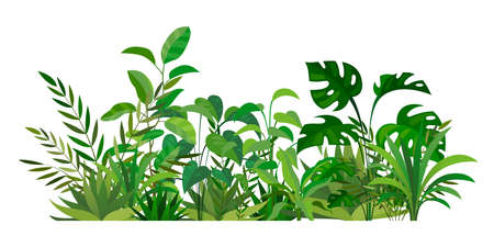 Herbal green decor. Beauty nature ferns and herbs. Tropical greenery with leaves and stems. Summer forest meadow plants. Natural botanical decoration. Vector wild field illustration