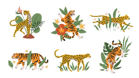 Tropical leaves with tigers, leopards and jaguars. Beautiful mini compositions with wild animals and exotic plants and flowers decor elements. Safari and zoo mammals vector isolated set