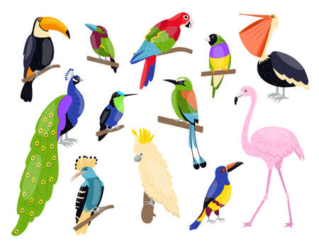 Tropical exotic birds. Bright color parrots, polynesian fauna, pink flamingo, toucan and peacock sitting on branch, summer wildlife and zoo isolated graphic elements, vector cartoon set