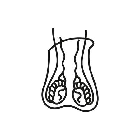 Fantastisch Männliche Fortpflanzungssystem Anatomie Zeitgenössisch ...