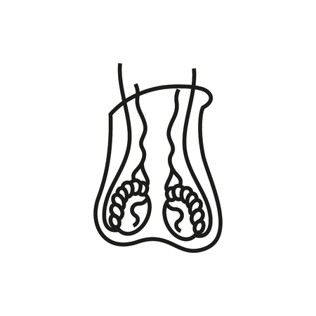 genitalia: Male reproductive system vector icon on white background Created For Mobile, Infographics, Web, Decor, Print Products, Applications. Icon isolated. Vector illustration