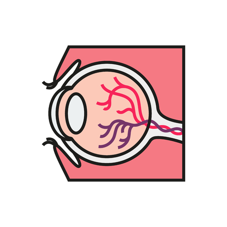 Cross section of human eye on white background Created For Mobile, Infographics, Web, Decor, Print Products, Applications. Icon isolated.