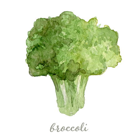 Watercolor broccoli - hand painted vector illustration Ilustrace