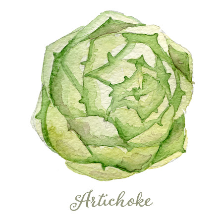french produce: Watercolor artichoke - hand painted vector illustration Illustration