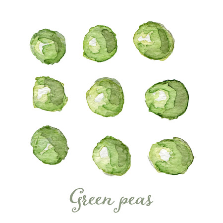 green peas: Watercolor green peas- hand painted vector illustration