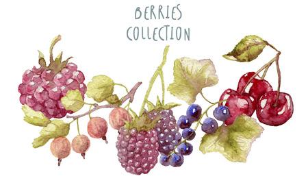 honeysuckle: Watercolor berries hand drawn isolated Stock Photo