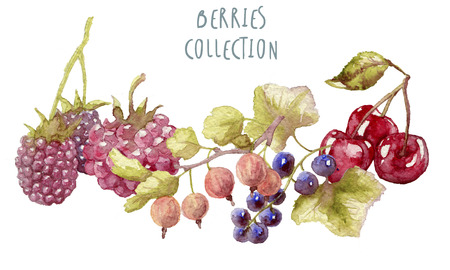 Watercolor berries hand drawn isolated Reklamní fotografie