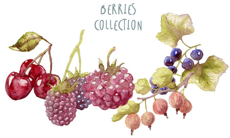 bramble: Watercolor berries hand drawn isolated Stock Photo