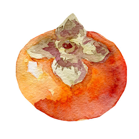 persimmon: Illustration of fruit persimmon. Hand drawn watercolor Stock Photo